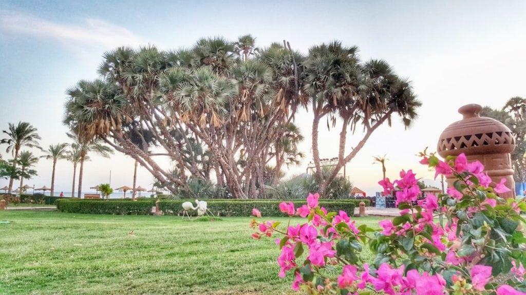 """مجموعة أشجار مذهلة تسمى """"حدائق القبّة"""""""