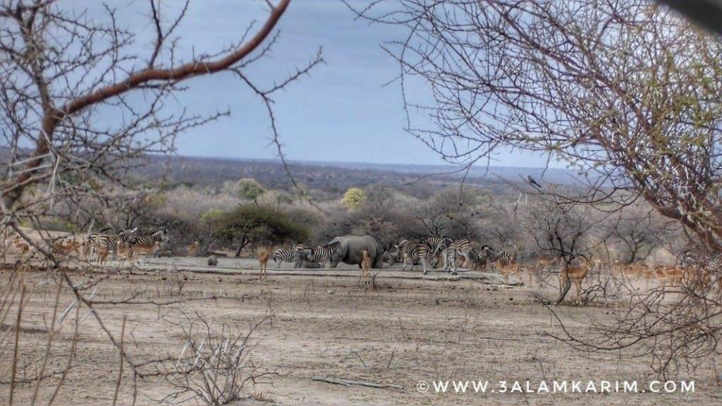 تجمعات هائلة من الحيوانات