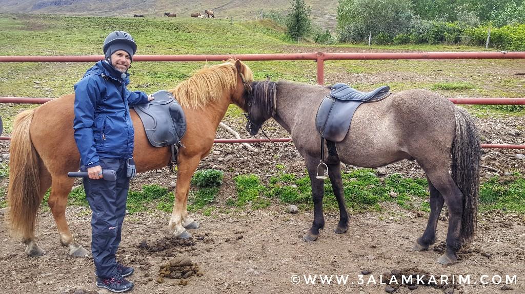 أيسلندا - حصاني في رحلة Skorrahestar