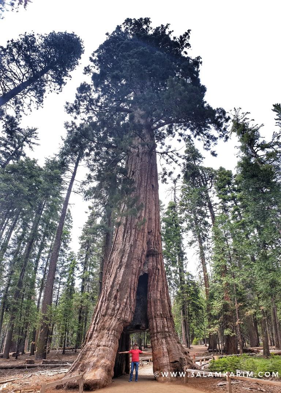 تصوير المناظر الشاهقة - كريم تحت الشجرة